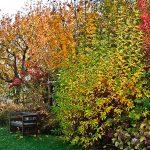 autunno alla Querceta